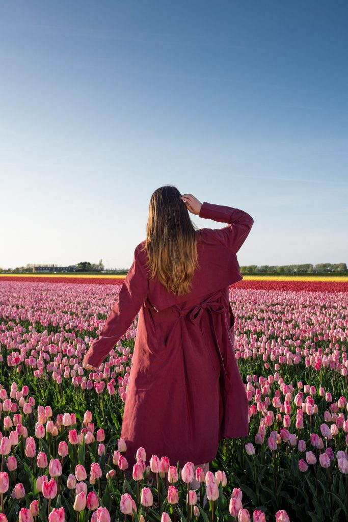 This guide covers how to find tulip and Dutch flower fields in The Netherlands with insider tips & tricks, routes and best locations.