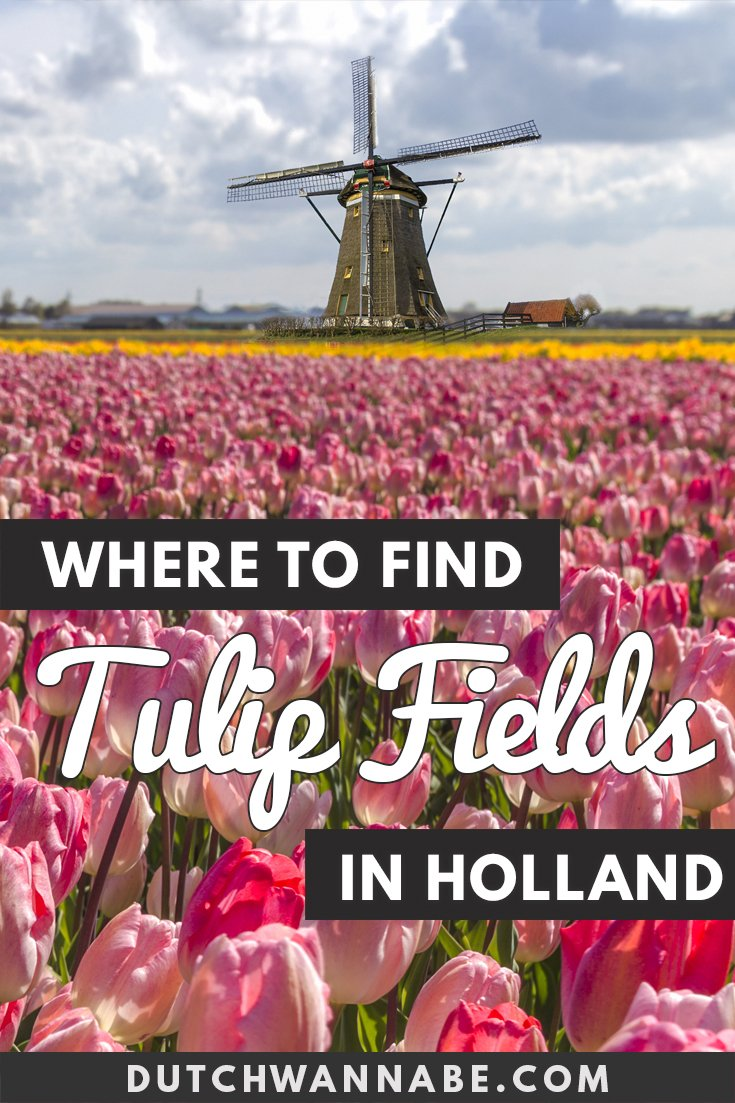 Where to find tulip fields in The Netherlands: the ultimate guide to the tulips in Keukenhof, Lisse and more. How to get to the fields from Amsterdam. #travel #netherlands #holland