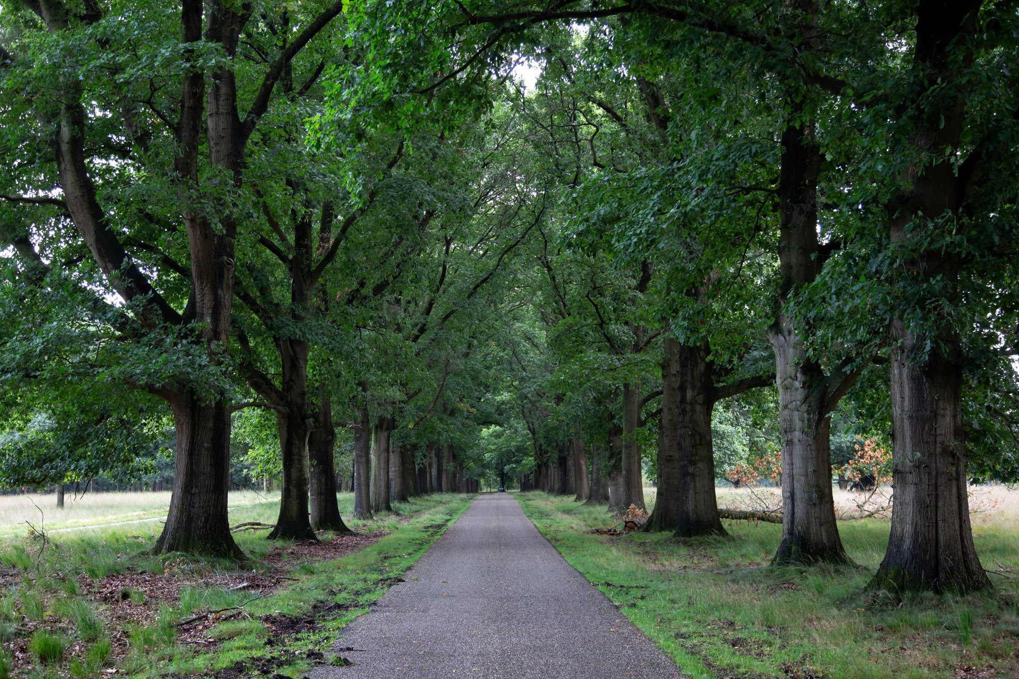 Green lush forest of Nationaal Park De Hoge Veluwe