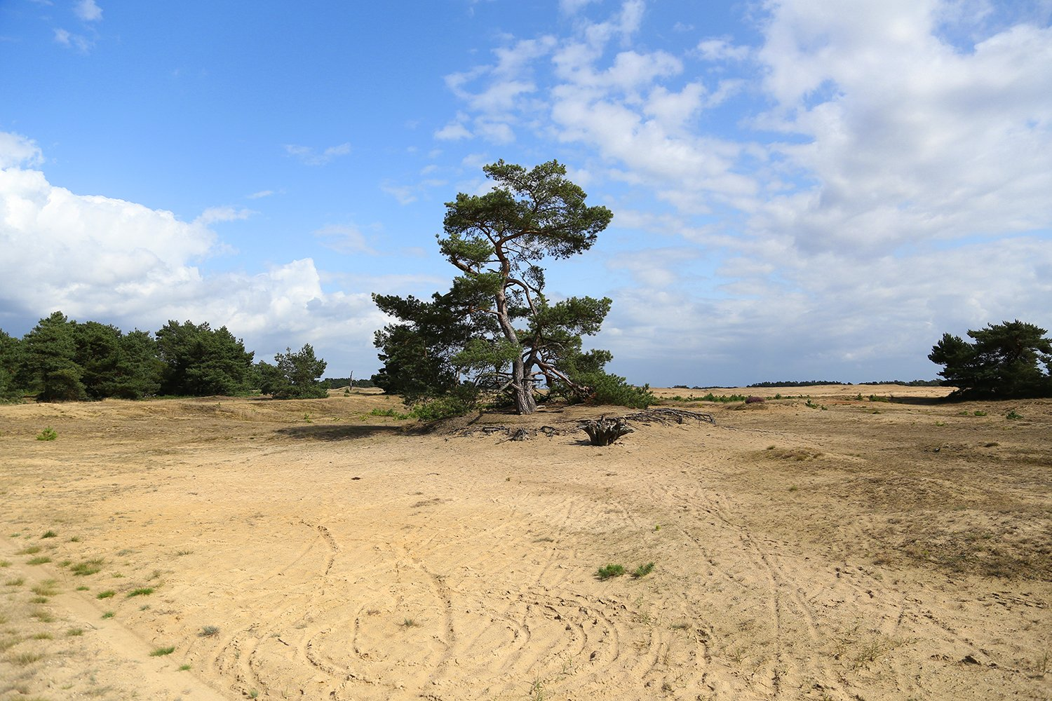 Lone green tree in the middle of sandy dunes under a cloudy blue sky