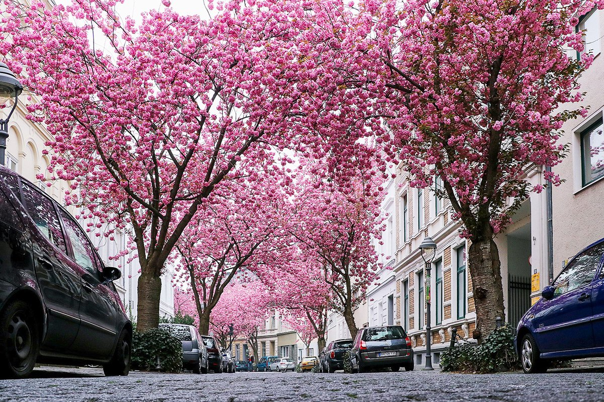 15 Exciting Things To Do In Bonn Germany In 2 Days Dutch Wannabe