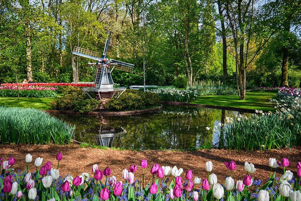 Keukenhof gardens in spring in The Netherlands