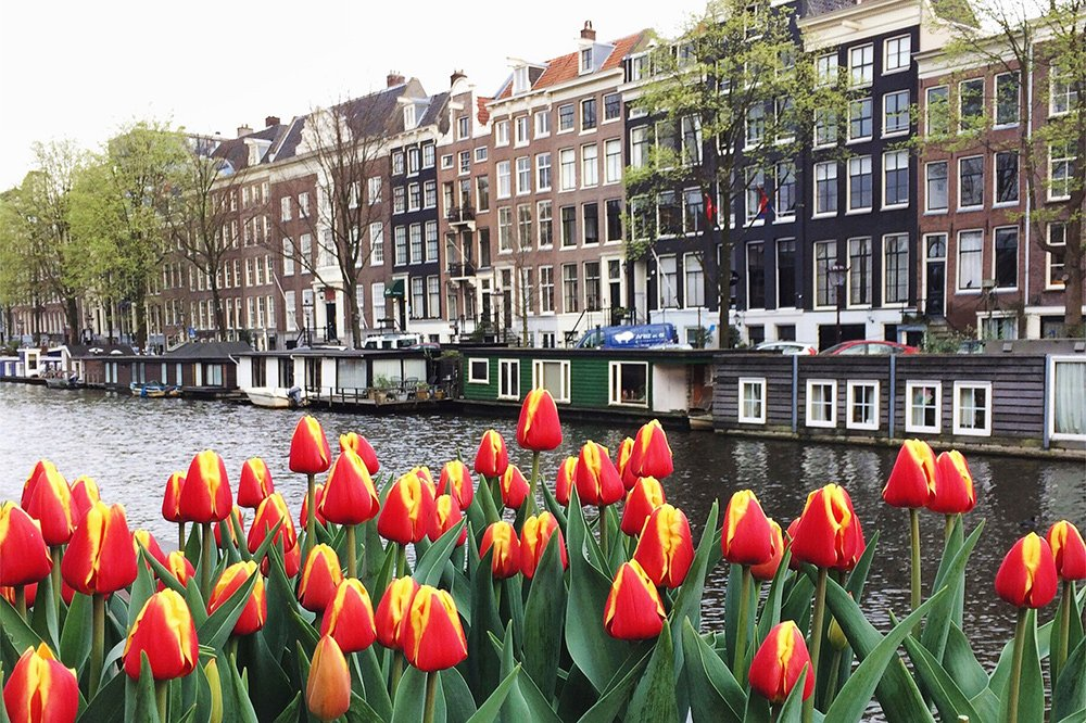 Tulip festival in Amsterdam: tulips on the canals