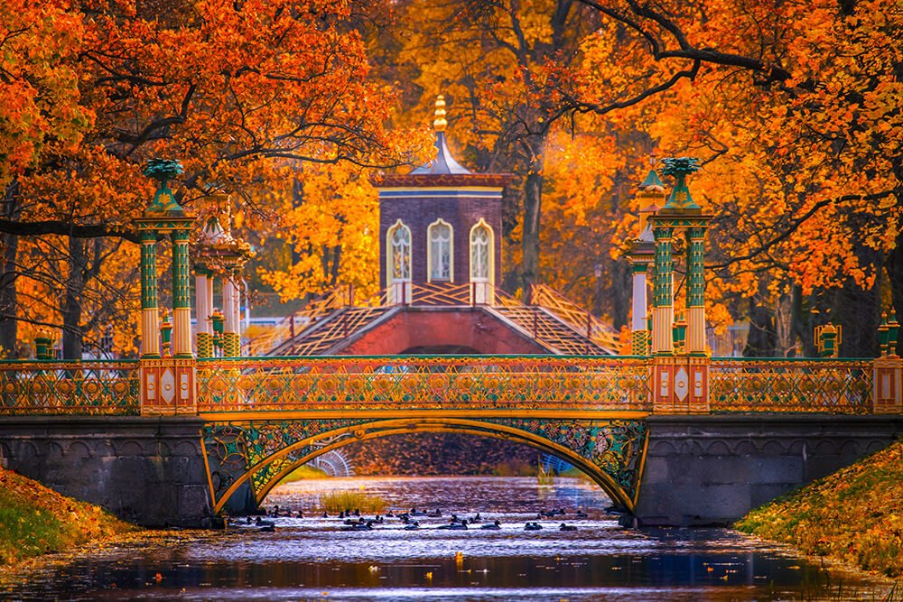 Red Autumn trees in Pushkin Russia, view on the Chinese Bridge