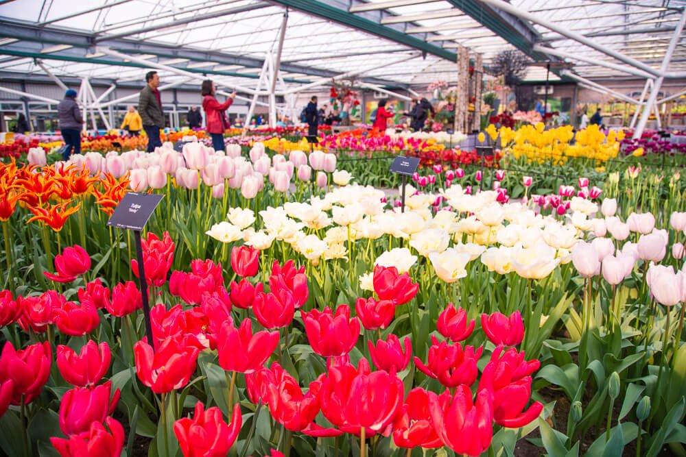 Tulip tour to Keukenhof