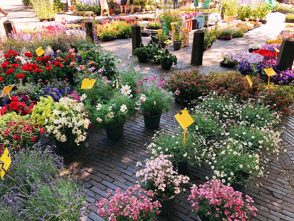 Janskerkhof flower market in Utrecht flowers in pots